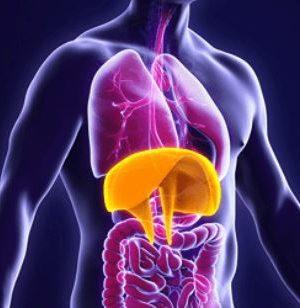 L. DAUBRICOURT - Le Diaphragme dans Tous ses états - 13 Mars 2020